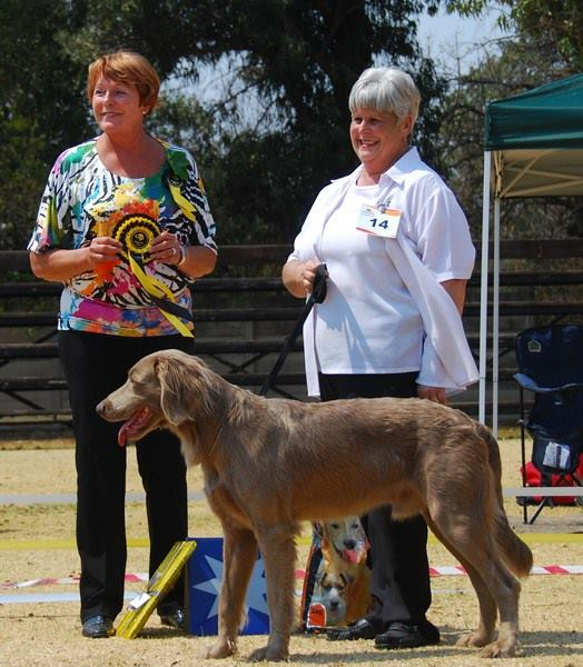 Best SA Bred in Show & CC Dog - Sabaka Mist Vanguard