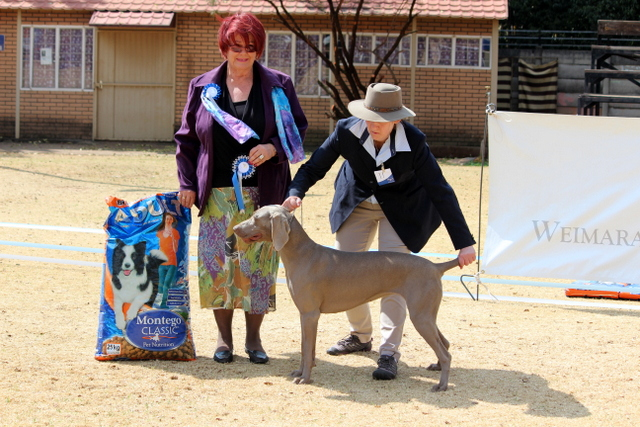 Best Junior: Hundwith Volante of Weathervane (Imp UK)