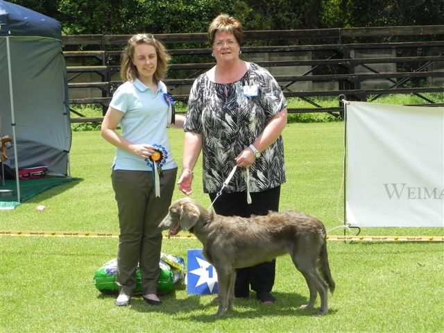 Best Puppy in Show Sabaka Mist Yardley Lize Venter