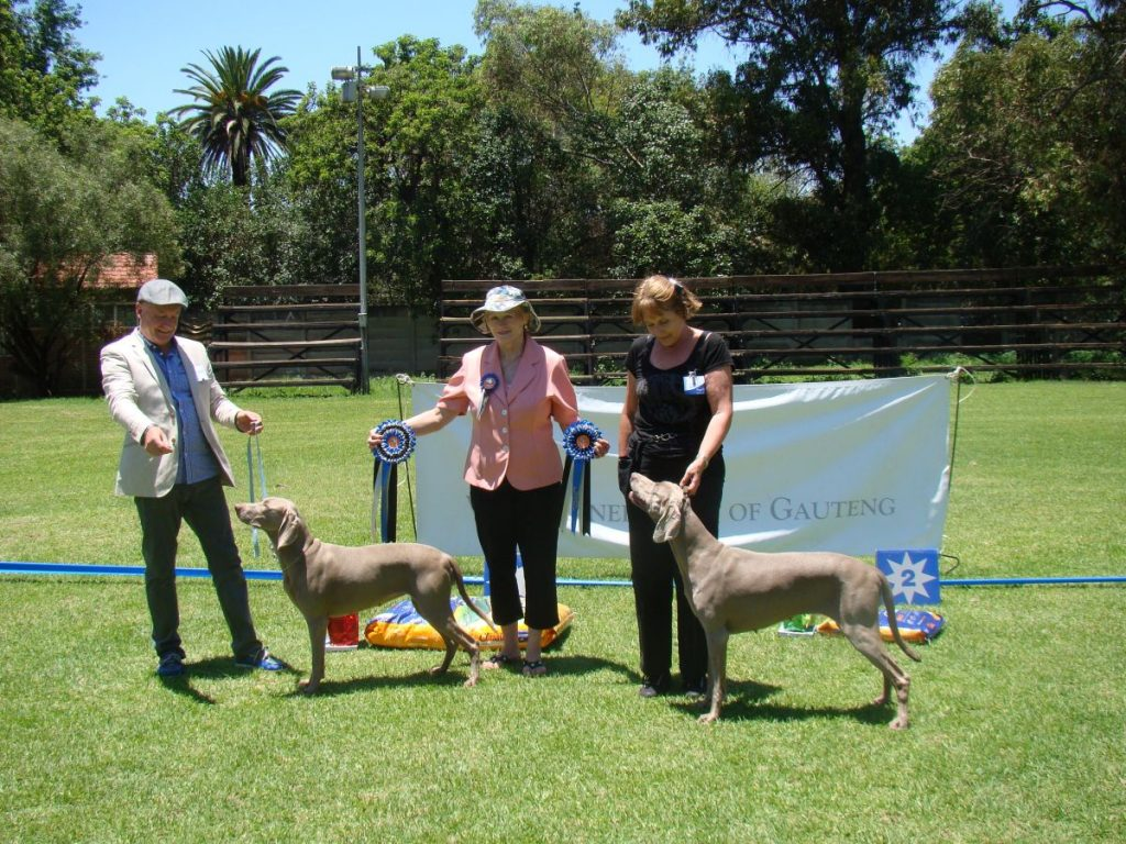 Best in Show (CH Mistylowlands Bonbon Monroe of Stahlberg) & Reserve Best in Show (Int.Ch., SA Ch. Re Poetry in Motion of the Grey Noble of Mistylowlands)