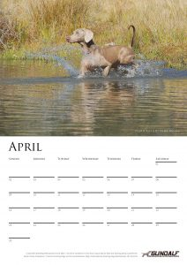 calendar-2017-chosen-a3-copy-added-04octrev2-page-005