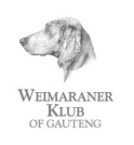 Weimaraners in South Africa